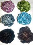 FP13 - Velvet Flower